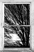 Picture Window Frame Photos Art - Tree Branches and Light White Farm House Picture Window Portrait by James Bo Insogna