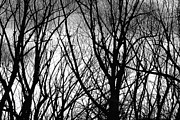 Photography Prints Prints - Tree Branches Into The Night Print by James Bo Insogna