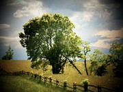 Frederick Framed Prints - Tree by a Long Fence Framed Print by Joyce  Kimble Smith