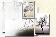 Mixed Media Nature Framed Prints - Tree Collage 2 Framed Print by Anahi DeCanio