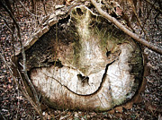 Faerie Photos - Tree Face by Menega Sabidussi