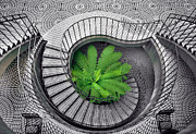 Daniel Furon Prints - Tree Fern in the Stairs Print by Daniel Furon