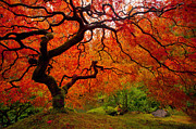 Colors Of Autumn Prints - Tree Fire Print by Darren  White