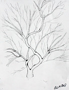 Pen And Ink Drawing Drawings - Tree flowing by Fred Miller