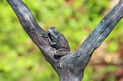 Laurel Butkins - Tree Frog