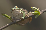 Odon Czintos - Tree Frog Sitting On The...