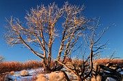 Adam Jewell - Tree Glow