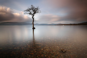 Photo Scotland - Tree