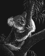 Koala Drawings Posters - Tree Hugger Poster by Heather Ward