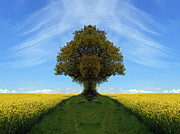 Colin Hogan Acrylic Prints - Tree In A Field Of Rapeseed - ref 0227 Acrylic Print by Colin Hogan