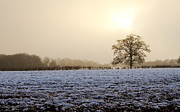 White River Scene Posters - Tree In A Field On A Snowy Day Poster by Fizzy Image