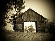 Indiana Trees Posters - Tree in Barn Poster by Joyce  Kimble Smith