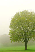Hazy Metal Prints - Tree in fog Metal Print by Elena Elisseeva