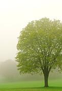 Tree In Fog Print by Elena Elisseeva