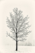 Tree In Heavy Snow Print by Joseph Duba