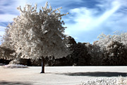 Arnold Nagadowski - Tree in Infrared