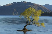 Stuart Litoff - Tree in Lake Wanaka