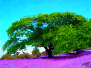 Bruce Nutting - Tree in Lavender