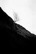 Glen Etive Prints - Tree in mist ii Print by John Farnan