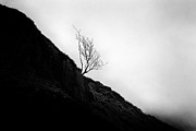 Glen Etive Prints - Tree in mist Print by John Farnan