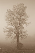 Eje Gustafsson - Tree in morning fog