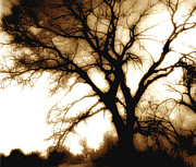 Tree Photograph Prints - Tree in Sepia Print by Ann Powell