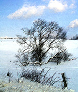 Photography By Govan; Vertical Format Prints - Tree in Snow Print by Andrew Govan Dantzler
