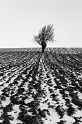 Ploughed Prints - Tree in snow Print by John Farnan