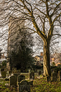 Tree In St Mary Magdalen's Church Yard Print by David Isaacson