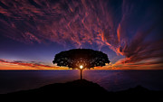 On The Coast Prints - Tree in Sunset-2 Print by Bess Hamiti