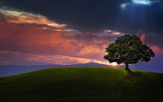 In A Tree Posters - Tree in Sunset Poster by Bess Hamiti