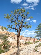 Heather Dunsmoor - Tree in the Hoodoos