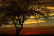 Sunset Greeting Cards Digital Art Prints - Tree in the Hot Desert Print by Beverly Guilliams