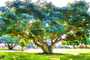 My Art In Your Home Slide Show  - Tree in the Park by Chuck Staley