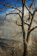 Snow On Trees Prints - Tree In Winter Print by Lois Bryan