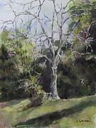 Janet Felts - Tree
