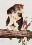 Kangaroo Drawings - Tree Kangaroo by Susan Pope