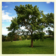 Tree Print by Les Cunliffe