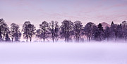 Winter Trees Metal Prints - Tree line Metal Print by Jorge Maia