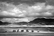 Big Sky Framed Prints - Tree Line Framed Print by Peter Tellone