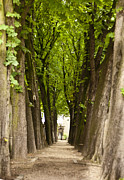Paris Cemetery Prints - Tree Lined Avenue at Pere Lachaise Print by Georgia Fowler
