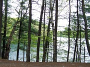 Walden Pond Photo Posters - Tree Lined Pond Poster by Catherine Gagne