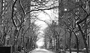 Hiver Framed Prints - Tree Lined Snowy Street NYC Framed Print by Anahi DeCanio