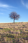 Landscape Photos - Tree by Lyubomir Kanelov