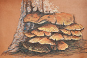 Mushroom Pastels - Tree Mushrooms by Rebecca  Hudnall