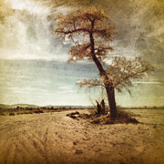 Pam Vick - Tree Near The Road