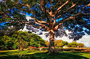 Garden Scene Metal Prints - Tree of Joy. Mauritius Metal Print by Jenny Rainbow