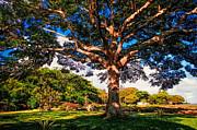 Jenny Rainbow - Tree of Joy. Mauritius
