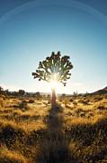 An  Pham - Tree of Life