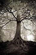 Tree Roots Photo Posters - Tree of Life Poster by Dominique De Leeuw